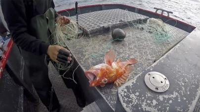 Porto de Abrigo quer avaliação política pelo Parlamento regional e análise da legalidade da criação da Cooperativa de Pesca dos Açores