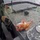 PCP/Açores exige que Fundo Pesca seja um verdadeiro apoio aos pescadores açorianos