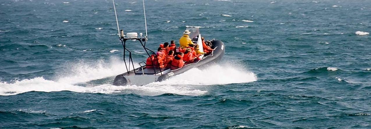 Empresas de observação de baleias estão a prejudicar-se por se concentrarem apenas ao largo de Ponta Delgada