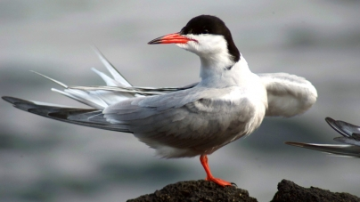Workshops sobre recuperação de aves selvagens em São Miguel, Pico e Corvo