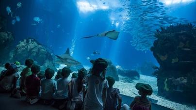 Oceanário anuncia expansão e organiza expedição científica aos Açores