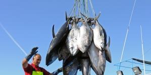 Madeira: Pesca nunca deu tanto dinheiro como em 2017