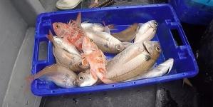 Pescadores de Santa Maria chegam a entendimento para a descarga de pescado na lota
