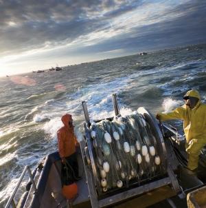 Mais de metade da pesca em alto mar vive de subsídios