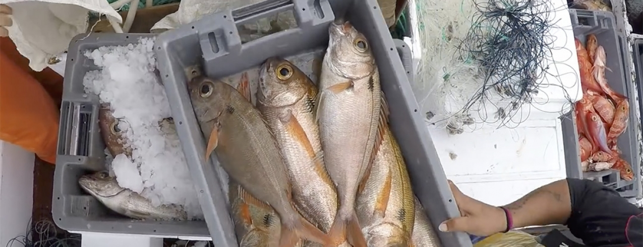 Em 2017 o preço médio do pescado nos Açores foi do mais alto do país