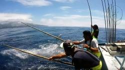 Diretor Regional das Pescas dos Açores alerta para importância de garantir uma pescaria sustentável de atum