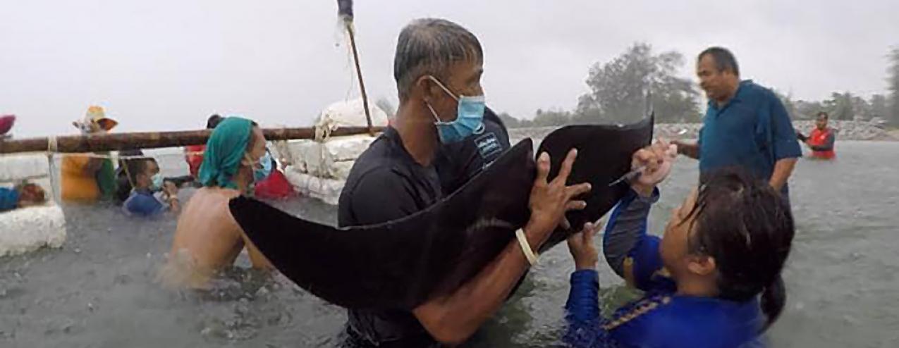 Baleia morre depois de engolir mais de 80 sacos de plástico no mar da Tailândia