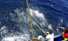 Pescadores açorianos beneficiam de cedência de 120 toneladas de quota de atum patudo de Espanha a Portugal