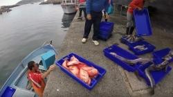 Governo dos Açores participa em consulta pública da União Europeia sobre possibilidades de pesca para 2019