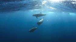 Em todo o mundo são mortos 100 mil golfinhos por ano