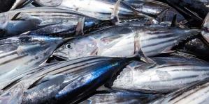 Descarregadas nos Açores 6.845 toneladas de atum, quatro vezes mais que em 2017
