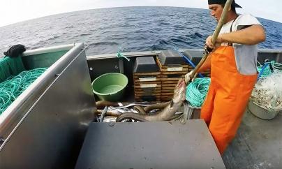 Governo dos Açores apresenta posição sobre auxílios para renovação das frotas de pesca nas Regiões Ultraperiféricas propostos pela Comissão Europeia