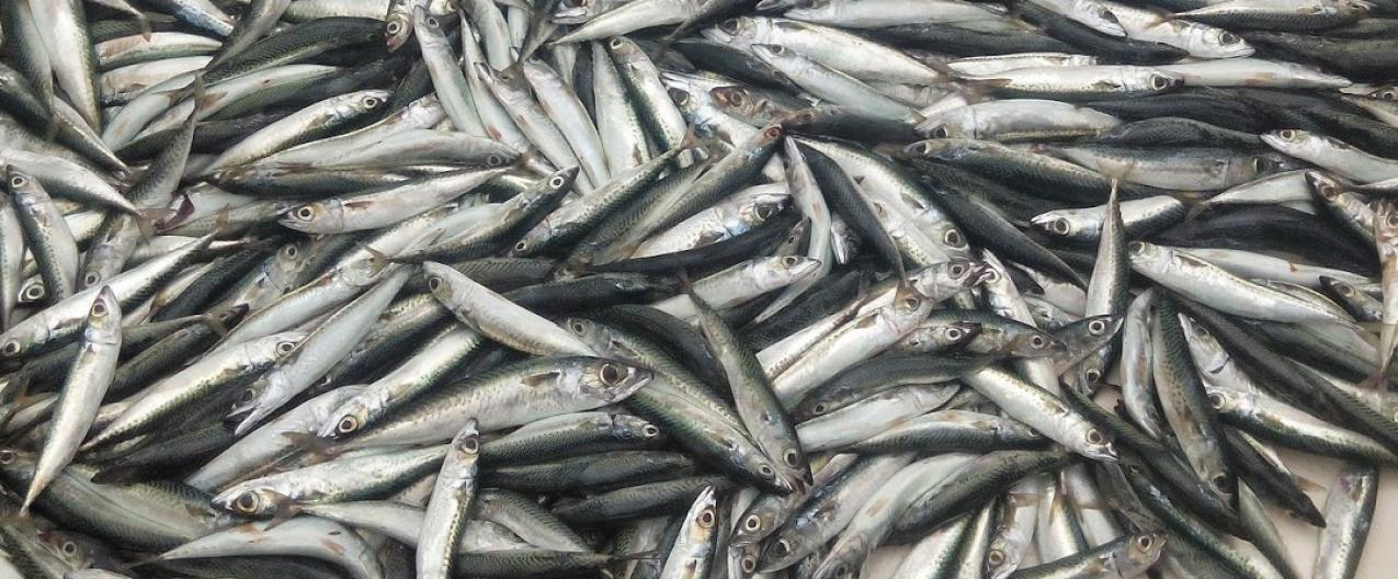DGRM e a PONG-Pesca promovem Seminário sobre os desafios e as oportunidades na pesca sustentável