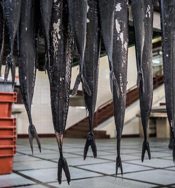 Espécies de profundidade // a última oportunidade de acabar com a sobrepesca até 2020