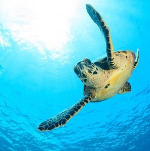 Açores são região chave no ciclo de vida das tartarugas, afirma Diretor Regional dos Assuntos do Mar