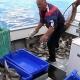 Em 2018 foram pescadas 29,4 mil toneladas de pescado nos Açores, no valor de 37,9 milhões de euros