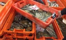 Em 2018 o valor do pescado comercializado nas lotas do continente português subiu 4,9% atingindo 205 milhões de euros
