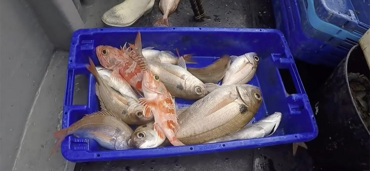 Gui Menezes anuncia que pescadores açorianos passam a dispor de 228 toneladas de quota de goraz até ao final do ano