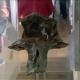 Fóssil com seis milhões de anos encontrado nos Açores