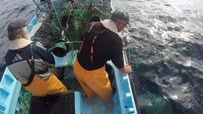 Governo dos Açores propõe criação de quotas para espécies mais vulneráveis e regime de abate a artes de pesca menos seletivas