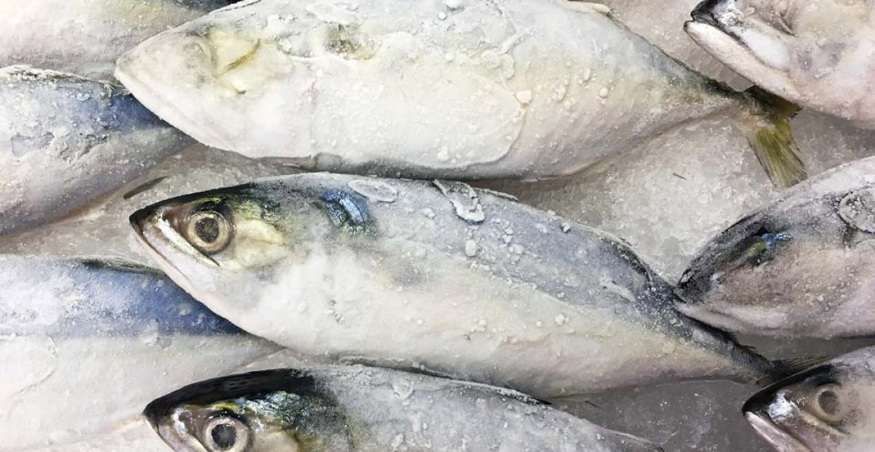 Governo dos Açores adjudica requalificação do Entreposto Frigorífico da Horta