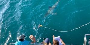 Governo dos Açores reforça apoio à investigação marinha e à contratação de investigadores