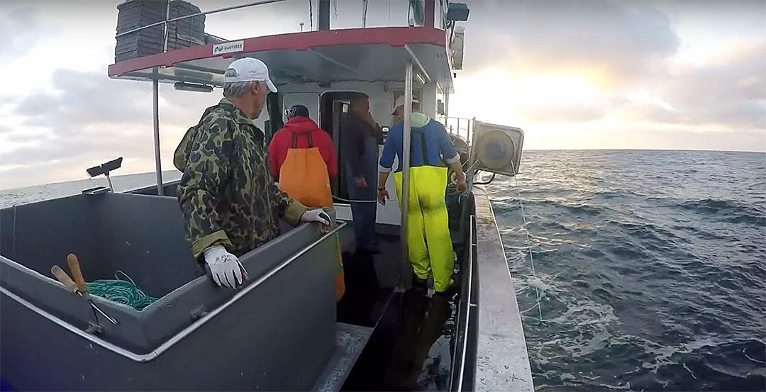 Pescadores dos Açores com 543 toneladas de goraz e 140 de imperador e alfonsim