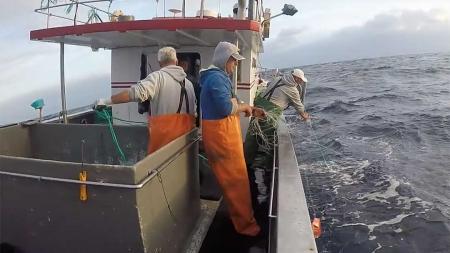 Governo dos Açores promove estudo sobre as pescas