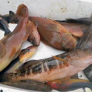 """'Porto de Abrigo' alerta que a portaria que define quotas para o peixe de fundo """"é de duvidosa constitucionalidade"""""""