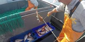 Covid-19 // Pesca nos Açores // Contratos de abastecimento