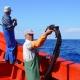 Covid-19 // Madeira: Armadores, pescadores e empresários propõem suspensão da pesca no mês de Abril