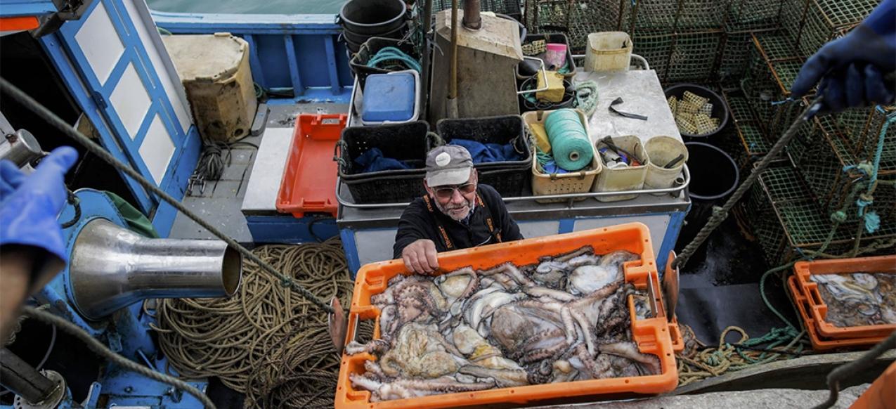 Covid-19 // Pescadores à beira de um ataque de nervos