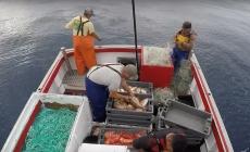 Covid-19 // Fundopesca começa hoje a ser pago a 650 profissionais da pesca açorianos