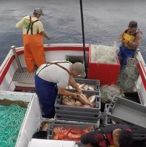 Fundopesca começa hoje a ser pago a 650 profissionais da pesca açorianos