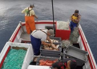 Pescadores açorianos insatisfeitos com fecho de capturas pedem compensações