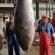 Atum com 383 quilos pescado nos mares da Madeira