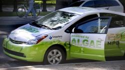 Veículos movidos a algas marinhas? Investigadores optimistas com resultados