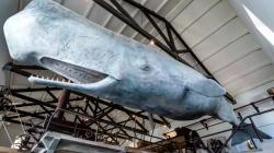 Museu da Fábrica da Baleia de Porto Pim reabre no dia 25 de maio