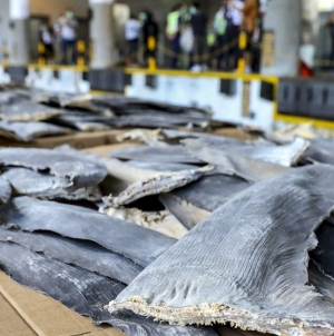 Maior apreensão de barbatanas de tubarão em Hong Kong