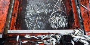NEF: Portugal é o 3.º país da UE com mais sobrepesca