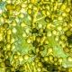 Microalgas podem ser fonte alternativa de ómega-3, em vez dos peixes, aponta estudo