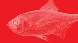 Aviso de interdição da pesca dirigida ao Alfonsim e limite máximo de captura do Imperador