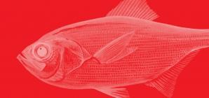 Alfonsim: Interdição de pesca dirigida a partir de 20 de julho