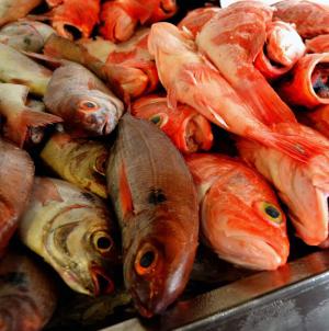 Peixe com preços inacessíveis ao consumidor nos Açores