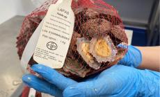 Embalamento de lapas instalado na nova lota do Funchal