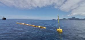 Ancorados dois agregadores para atum ao largo das ilhas Faial e Pico